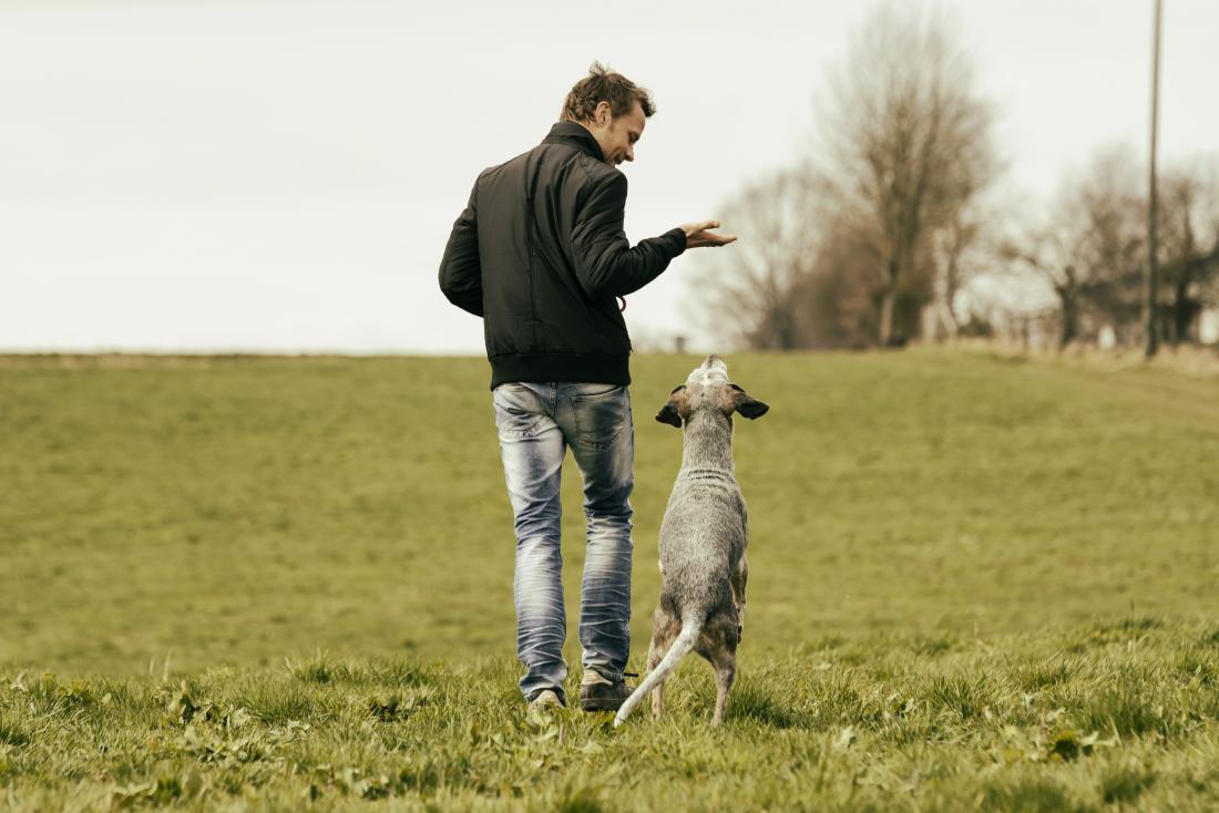 Man walking with dog in grassy field