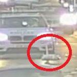 Nice swan: Bird on motorway causes rush-hour chaos in Glasgow