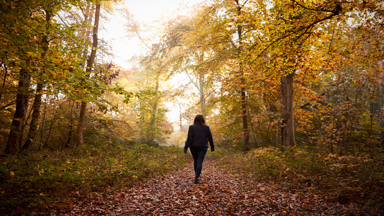 8-ways-a-walk-in-the-woods-could-change-your-life-creativity