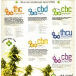 How CBD Works To Improve Your Health