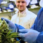Marijuana grower Tilray rallies 3% after sales more than double