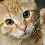 USDA ends practice of deadly experiments on kittens