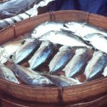 Eating fish cuts bowel cancer risk: study