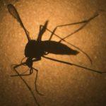 Eradicating malaria possible, but not soon