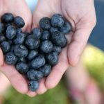 Blueberries And Your Health