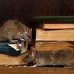 Medical News Today: For rats, empathy may be a survival strategy