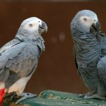 Medical News Today: Are some parrots selfless?