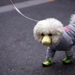 Coronavirus and Your Dog: No Need to Panic Yet