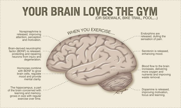 Your Brain Loves The Gym Infographic